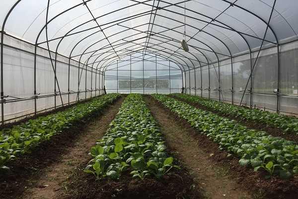 Màng PE 2.4 lõi 0.5 bọc, cố định, bảo vệ thực phẩm trong sản xuất nông nghiệp.